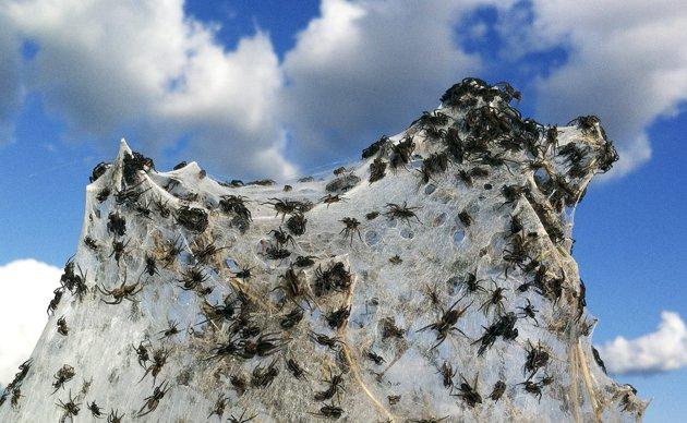 [Image: spiders-flood.jpg]